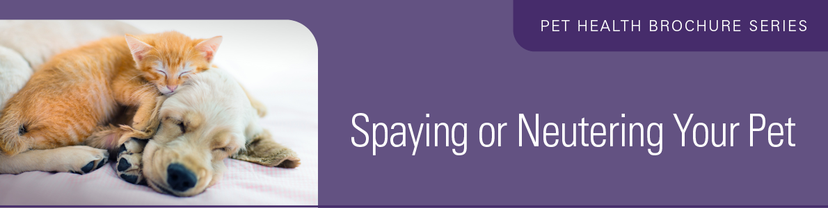 Spaying or Neutering Your Pet